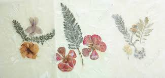 Wax Paper Flower Dried Pressed Flowers Grunge Background Antique Flora Parchment