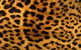 Leopard Pattern Interesting Download 48x48 Leopard Pattern Fur Wallpapers For MacBook Pro