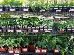 garden centers near me. Delighful Garden Plant Nursery Alexandria VA In Garden Centers Near Me