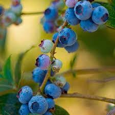 Non Gmo Fruit Trees For Sale