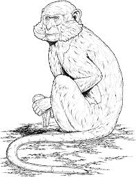 Free Monkey Coloring Page Printables With Free Monkey Coloring Pages