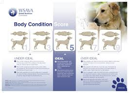 Dogs Newfypoo Weight Chart Pets Stack Exchange