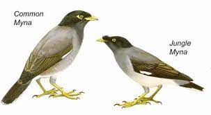 36. Bird checklist for American Samoa previous section | park Home page |  table of contents