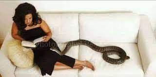 Sexy women and snake stories