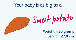 26 Weeks Is How Many Months Chart 22 Weeks Pregnant Your Pregnancy Week By Week Bounty