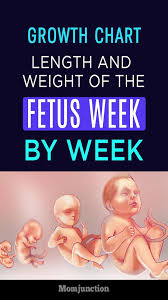 Growth Chart Fetal Length And Weight Week By Week Health