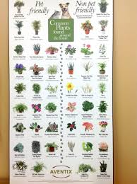 List of pet-friendly and toxic plants to pets, pet friendly plants, toxic
