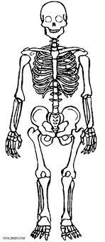 Skeleton Coloring Sheet Skeleton Coloring Sheet Printable Skeleton
