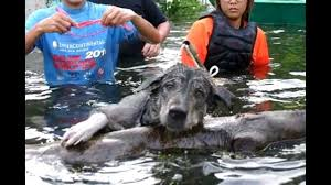 Image result for pictures of people rescuing people