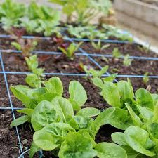square foot garden plans beginners