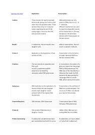 Translation Vs Transcription Venn Diagram Dna Replication
