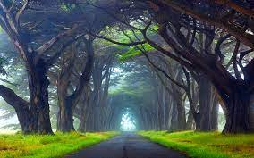 Nature Tunnel Of Trees Way Point Reyes ...