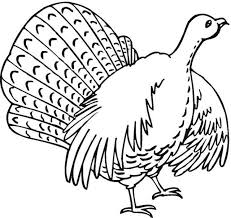 turkey coloring pages printable free.  Turkey Even More Turkey Coloring Pages A Turkey In The Wild To Pages Printable Free G