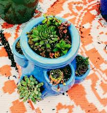 round glass container rocks and assorted succulents picture 1 premium succulent