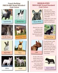 French Bulldog Color Chart French Bulldog Standard Vs Fad Colours