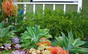 Small Picture Drought Tolerant Garden Designs Garden ideas and garden design