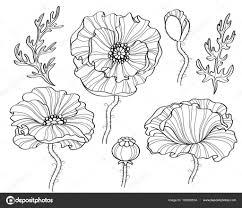 Klaproos Bloemen Zwart Wit Afbeelding Zeer Fijne Tekeningen