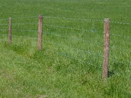 Barbed Wire Fence Cattle Barbed Wire Fence Cattle L Nongzico