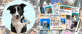 50 Tag All License States For - Pet Driver's Mypetdmv Official