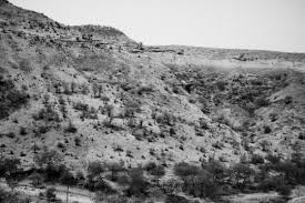 drought essay dushkal drought in marathwada photo essay by harsha  dushkal drought in marathwada photo essay by harsha vadlamani marathwada 23 2016 dead trees dot the