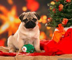 cute merry christmas wallpaper dogs. Simple Dogs Cute Christmas Dog Throughout Merry Wallpaper Dogs Y