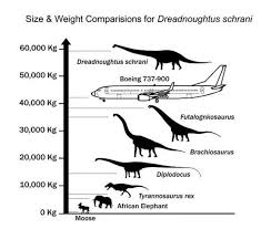 Dinosaur Weight Chart Huge Dinosaur Heavier Than A Boeing 737 Discovered Largest