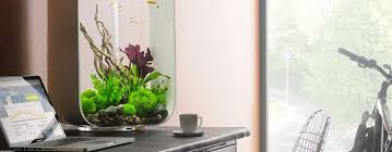 office desk aquarium. Plain Aquarium 7 Best Desktop Aquariums For The Office Intended Desk Aquarium L
