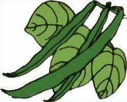 green beans clip art. Perfect Art Free Beans Plants Plant Clip Art At Clker Green Clipart Bean For Beans Art O