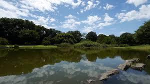 商用利用可能癒しの自然動画フリー素材no 007夏の青空と雲と池の風景