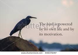 Birds Quotes