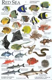 Fish Identification Chart Egypt Fish Chart Marine Fish
