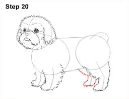 cute dogs drawings step by step. Interesting Cute How To Draw A Cute Shih Tzu Puppy Dog 20 Step  In Dogs Drawings By