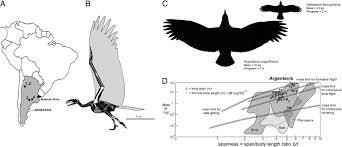 The Aerodynamics Of Argentavis The Worlds Largest Flying