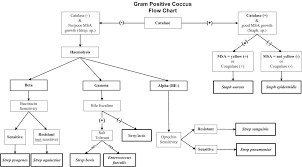 Catalase Negative Flow Chart Pictures To Pin On Pinterest
