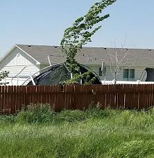 Tree falls on Idaho Falls home, dozens of other wind-related incidents  reported - East Idaho News