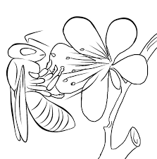 Small Picture Bug Museum Bug Coloring Pages Bee 5