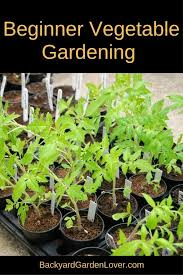 a beginner vegetable garden is a perfect way to introduce your family to the fresh taste of homegrown food yum