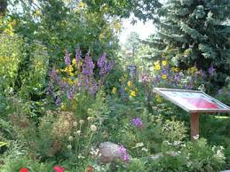 wildflower garden packages morning