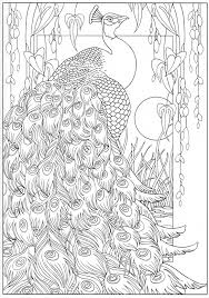 Peacock Coloring Page From Dover Pub
