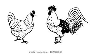 chicken clip art black and white. Exellent Clip Chickenblack And White Vector Picturestanding Rooster Hen Isolated On  Background In Chicken Clip Art Black And White A