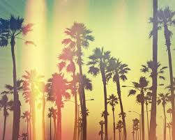 palm trees tumblr vintage. Summer Tumblr Wallpaper On Pinterest | Palm Trees, Sunsets And .. Trees Vintage A