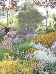 Image result for drought garden funny picture