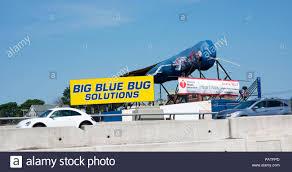 Big Blue Bug Solutions The Big Blue Bug Stock Photo 213210213 Alamy