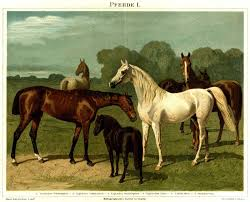 List Of Horse Breeds Wikipedia