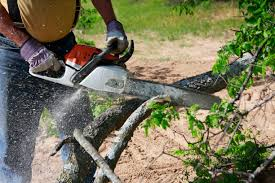 Tips for Finding the Best Tree Removal Company