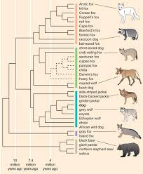Dog Dna Chart Genetics And The Shape Of Dogs American Scientist