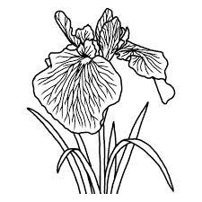 ハナショウブ花菖蒲白黒三重県の花都道府県の木花鳥イラスト