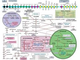 Metabolic Pathways Chart Mpmp Home
