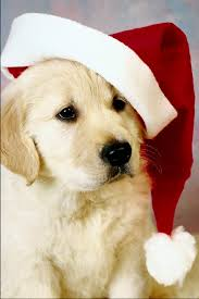 christmas puppy iphone wallpaper. Delighful Iphone Puppy Christmas Pictures Desktop Backgrounds 959x1436 Throughout Iphone Wallpaper S
