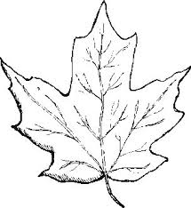 Small Picture Leaf Color Pages Leaf Coloring Pages Prints And Colors 18401